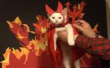 43599-devil-cat