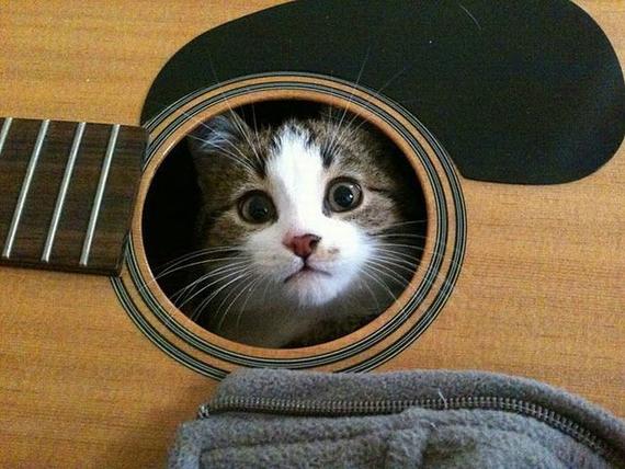 Cat_open_mic