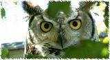 Owlsanc