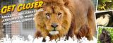 Animal_banner